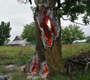برخورد صاعقه به یک درخت